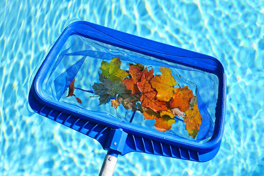 Skimming leaves off a swimming pool